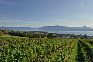 Zone viticole et champêtre