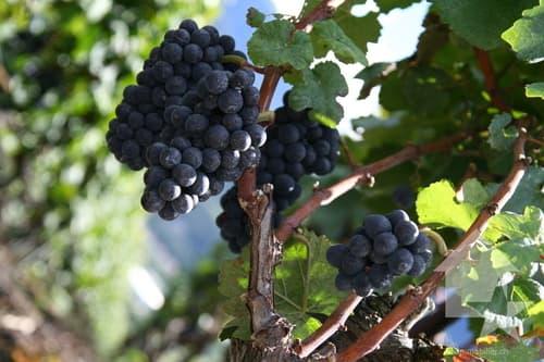 Grand domaine viti-vinicole