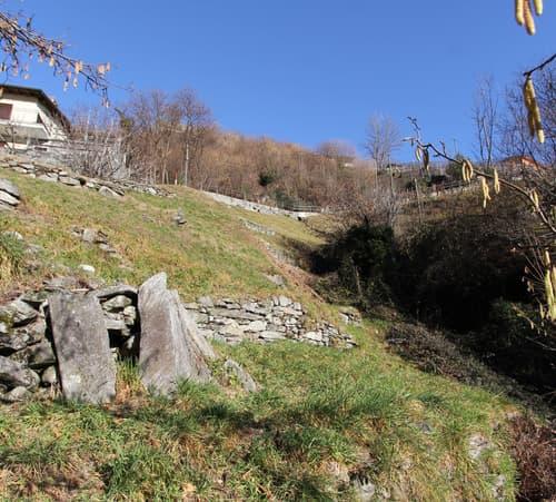 Terreno edificabile con vista / Bauland mit Aussicht