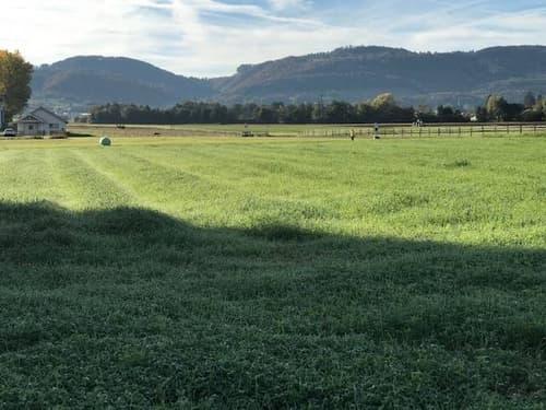 Vue depuis le terrain sur une belle zone agricole