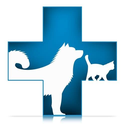 Valais  : Conseil en nutrition pour chiens et chats