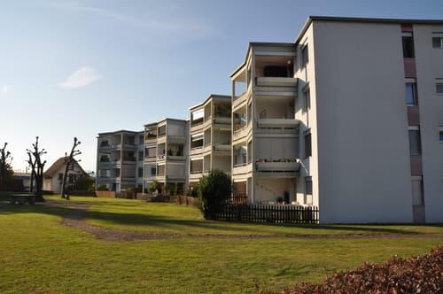 7 Wohnungen in einem Mehrfamilienhaus in Rothrist (1)