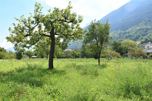 Baulandparzelle an ruhiger Lage von Eyholz bei Visp