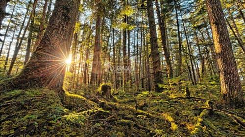 Wald Carona Bosco Carona