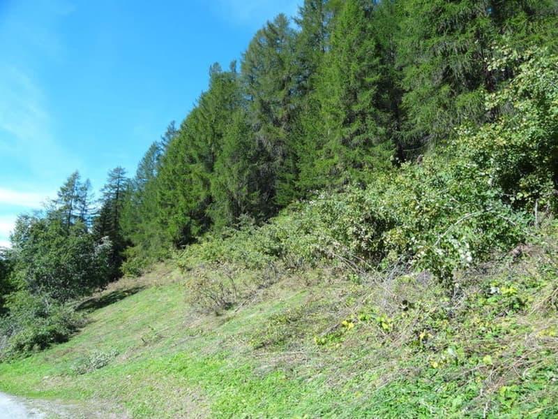 Bauland am Sonnenhang  diverse Parzellen (5)