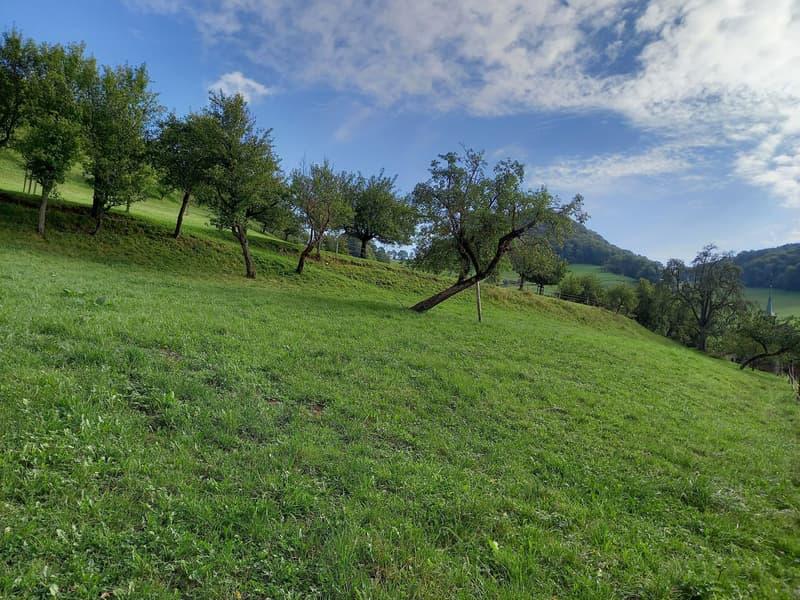 Grosses Grundstück in kleinem Dorf! (2)