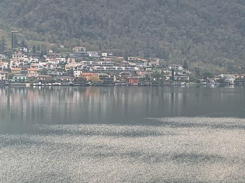 Palazzina vista lago - 5 appartamenti riattati - ottimo investimento (1)