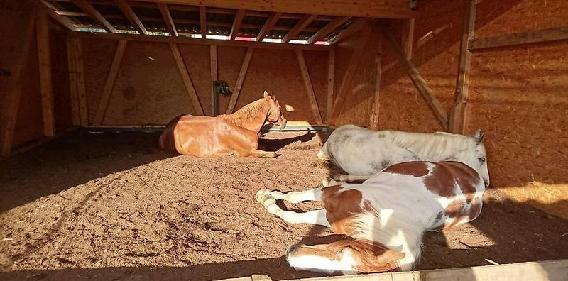 Bei Pferden wohnen: 6.5 -Zimmer-Hausteil zu vermieten (5)