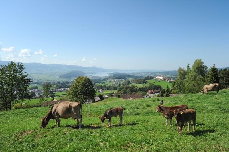 Grosszügiges Grundstück mit Berg- und Seesicht (13)